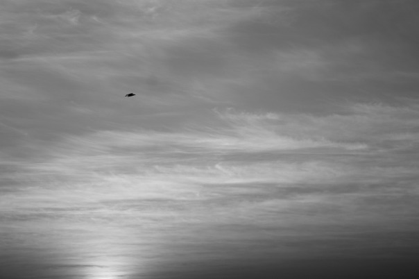 bird-166760_1280